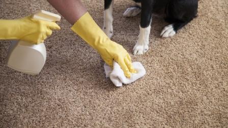 Tips Membersihkan Noda Hewan Peliharaan yang Membandel Pada Karpet Anda